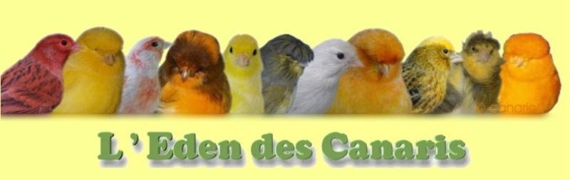 L'Eden des Canaris