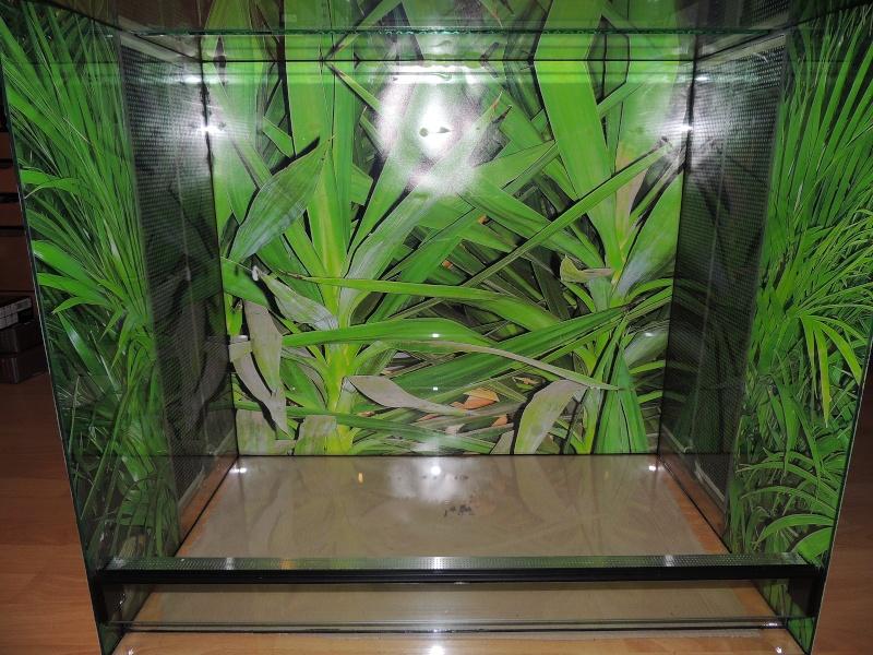 fixer un poster sur un terrarium en verre. Black Bedroom Furniture Sets. Home Design Ideas