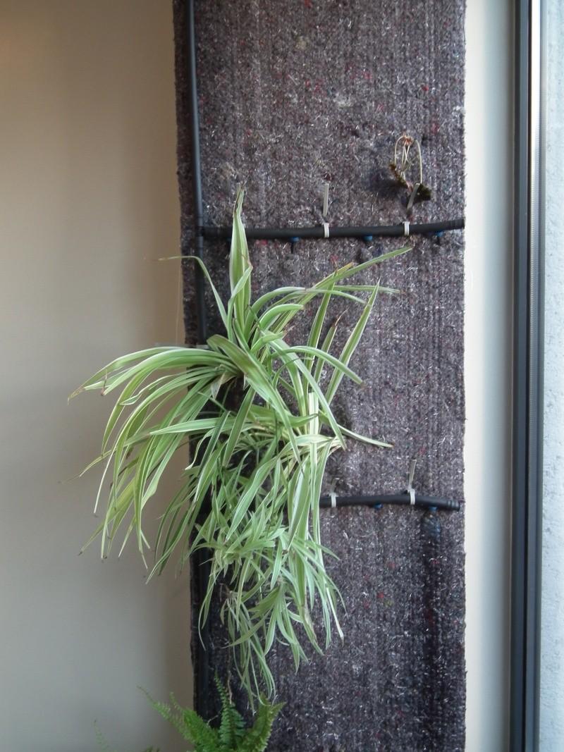 Phill mon premier mur v g tal for Mur vegetal fausse plante