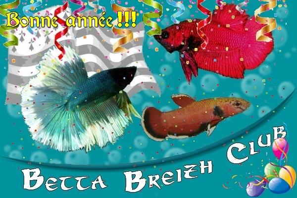 Betta Breizh Club