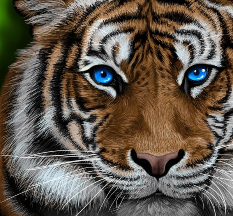 Mon histoire cr ative feutrine et crinoline - Tete de tigre dessin facile ...