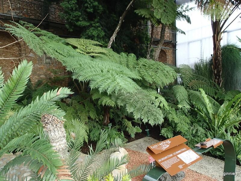 Mille et une orchid es au jardin des plantes 2014 paris for Au jardin des plantes