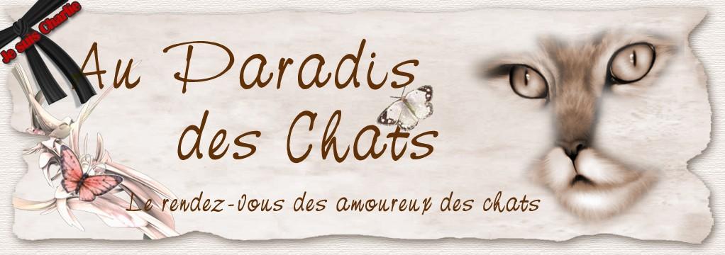 Forum Paradis des Chats