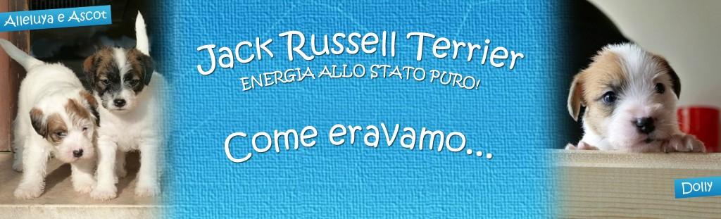 I Jack Russell in Italia