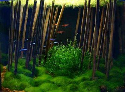 Tige de bambou et crevette for Que faire avec du bambou