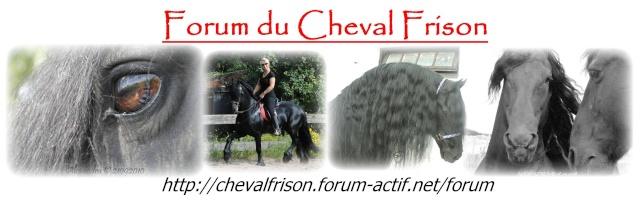 Forum du Cheval Frison
