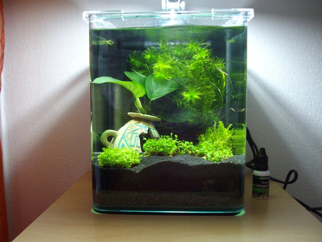 aquarium 10l. Black Bedroom Furniture Sets. Home Design Ideas