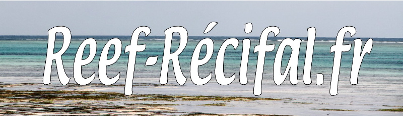 Reef-Récifal.fr