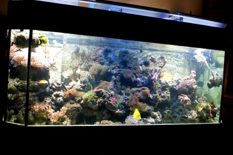 Aquarium d 39 eau de mer 450 l for Aquarium eau de mer