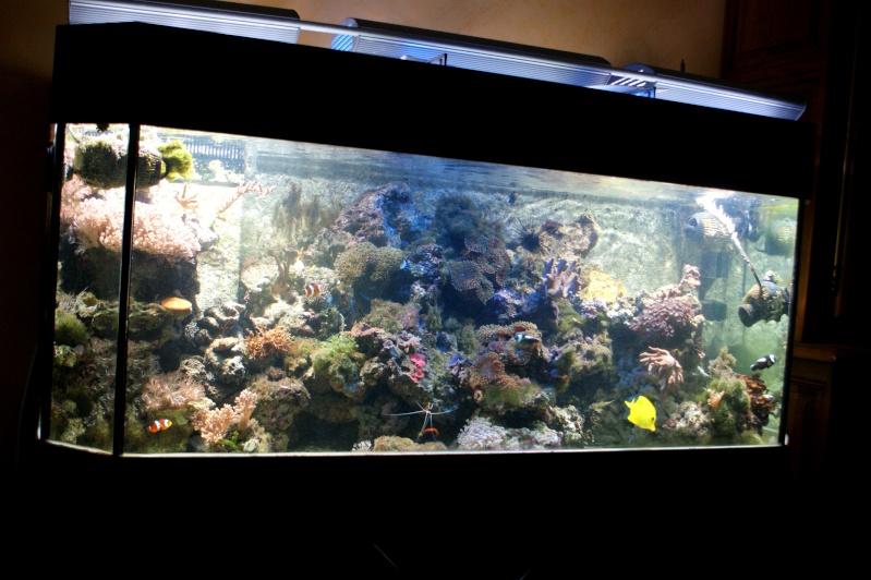 Aquarium d 39 eau de mer 450 l for Aquarium bac