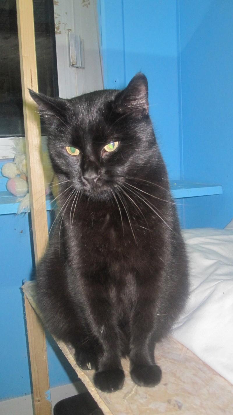 hypso chat noir n en 2010 nancy 54 meurthe et moselle. Black Bedroom Furniture Sets. Home Design Ideas