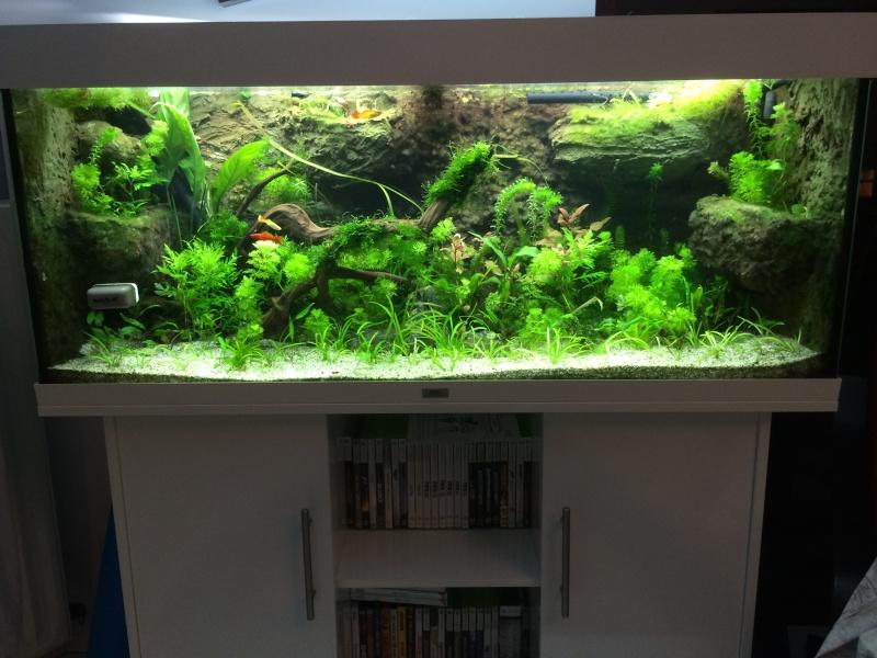 Bac de bouag 132 juwel 240 plant for Bac a poisson 2000l