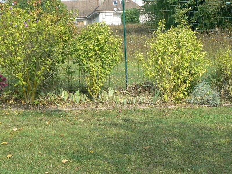 Question propos de l 39 hibiscus syriacus au jardin forum de jardinage - Bouture de l hibiscus de jardin ...