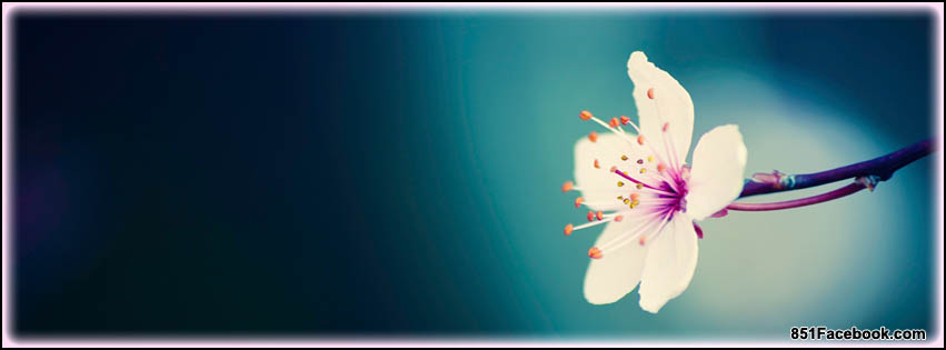 Spring Accommodation Facebook Covers: LOST General Board