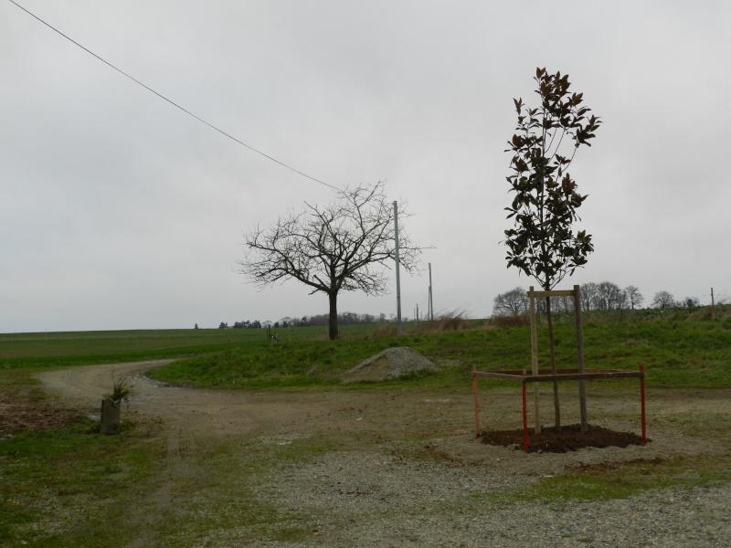 Plantation d 39 arbres et protection - Plantation d arbres synonyme ...
