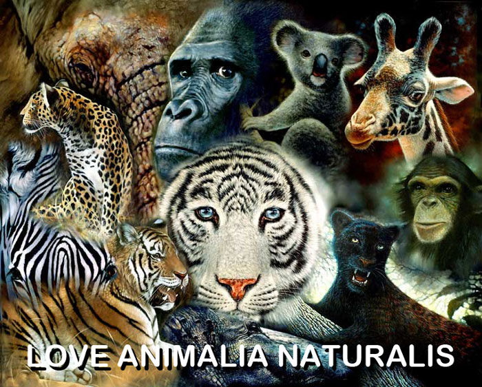 LOVE ANIMALIA NATURALIS ENVIRONNEMENTALIS