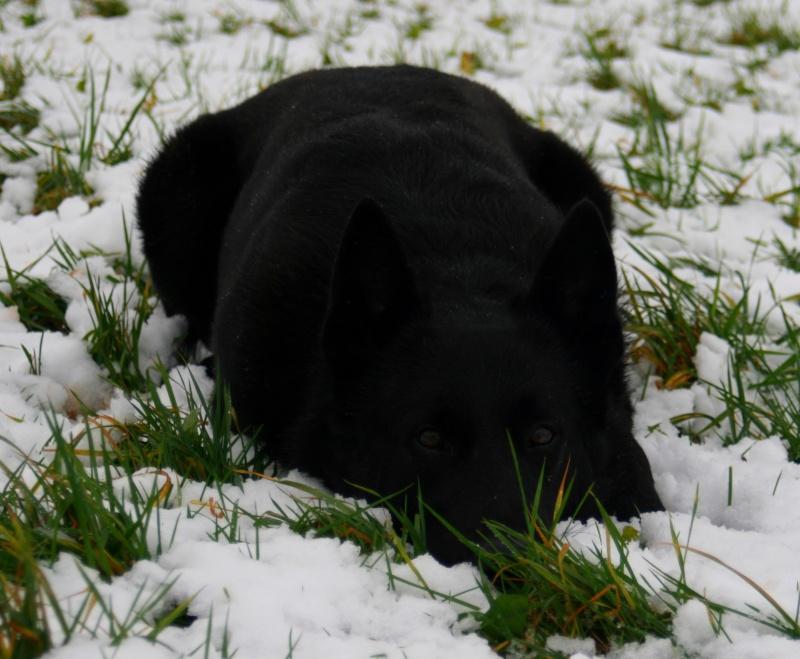 Agressivit pr dation envers les autres chiens - Bisounours tout curieux ...