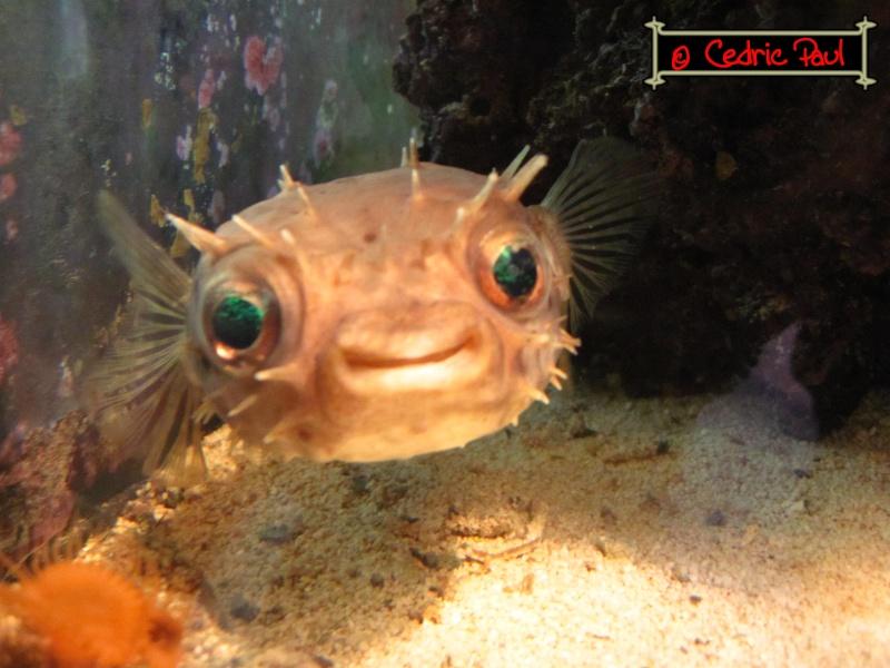 Simplement parce que c 39 est beau page 47 motus for Pompe pour petit aquarium poisson rouge