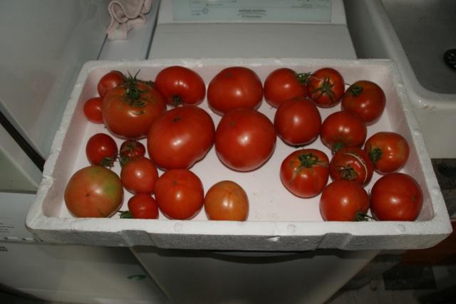 semis de tomates bio moisis page 3. Black Bedroom Furniture Sets. Home Design Ideas