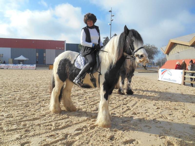 Irish salon du cheval avignon for Salon du cheval a avignon