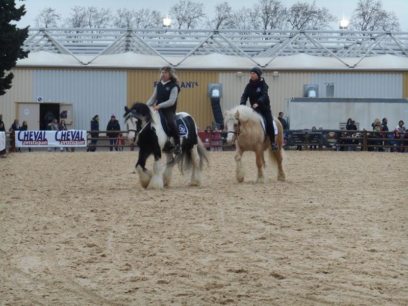 Irish salon du cheval avignon for Salon du cheval d avignon