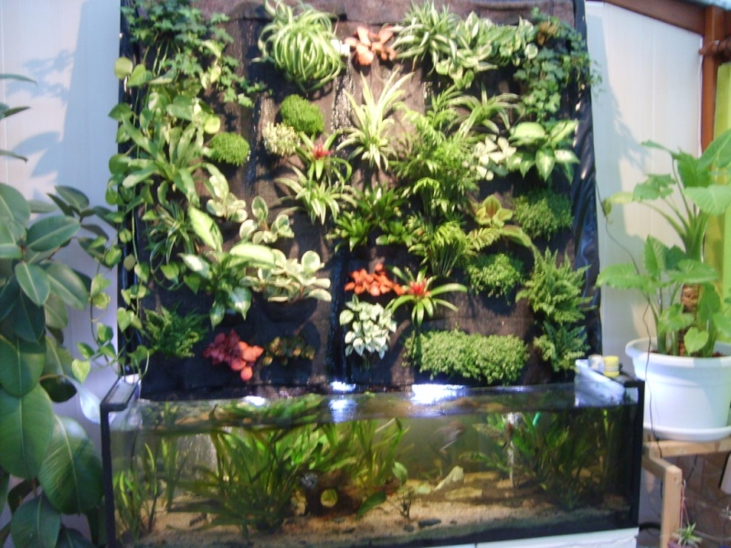 mur v g tal aquarium. Black Bedroom Furniture Sets. Home Design Ideas