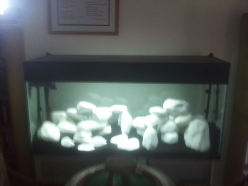 aquarium black or white 240l sans plante. Black Bedroom Furniture Sets. Home Design Ideas