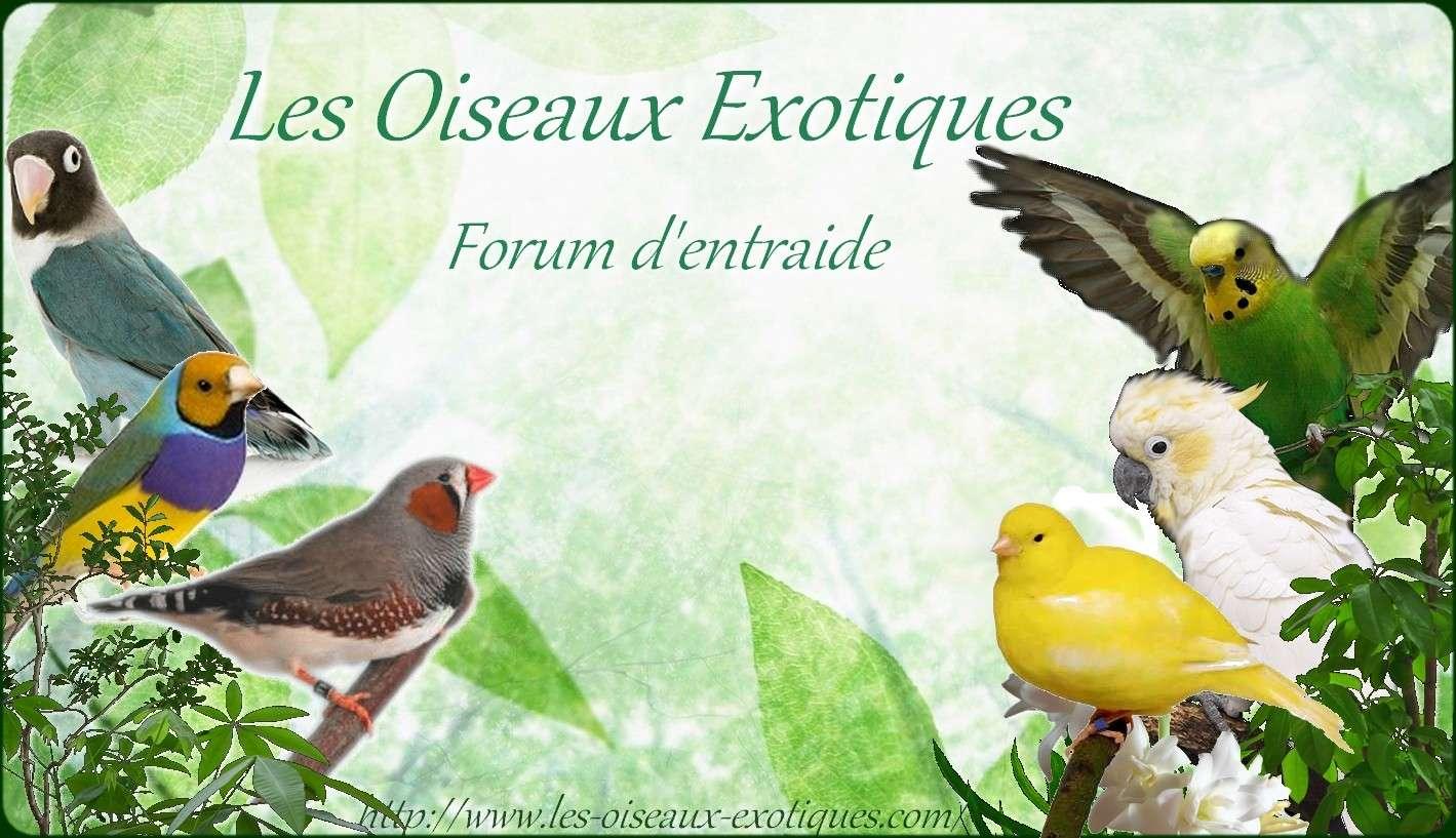 Les Oiseaux Exotiques (bec droit ou crochu ) Forum d'entraide