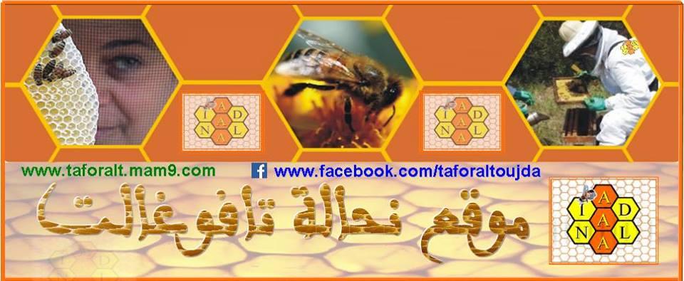 ~ منتديات نحال تافوغالت المتخصصة في تربية النحل ~