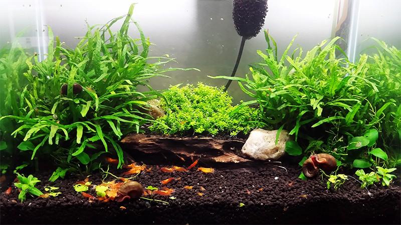 Mur v g tal avec aquarium de 320l paludarium page 9 for Dessinateur paysagiste