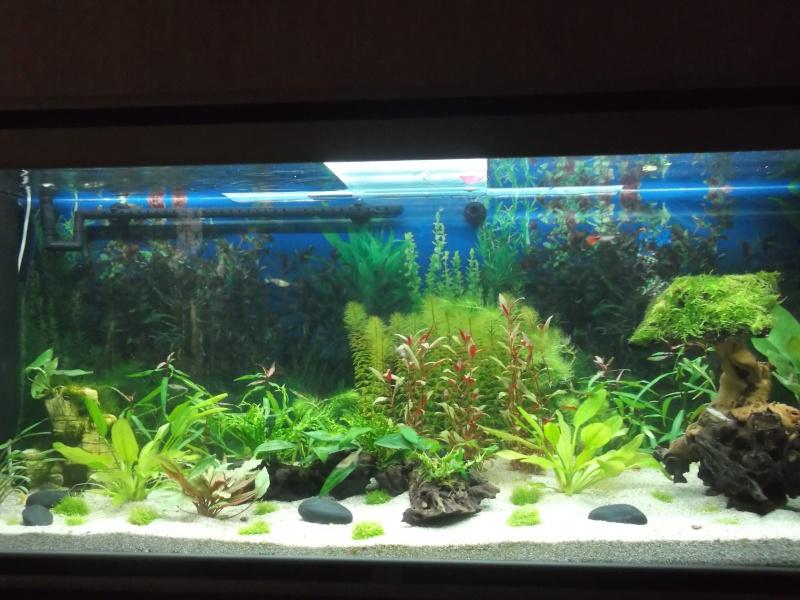 Mon aquarium 350 litres enfin fini vos avis for Aquarium 350 litres