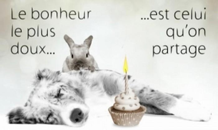 Joyeux anniversaire violette - Carte de voeux originale gratuite ...