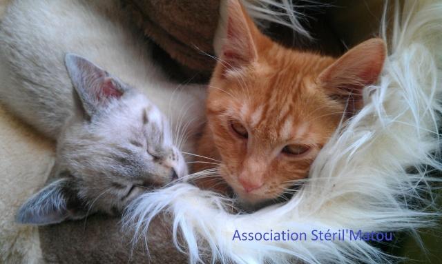 Les Chats de Stéril'Matou