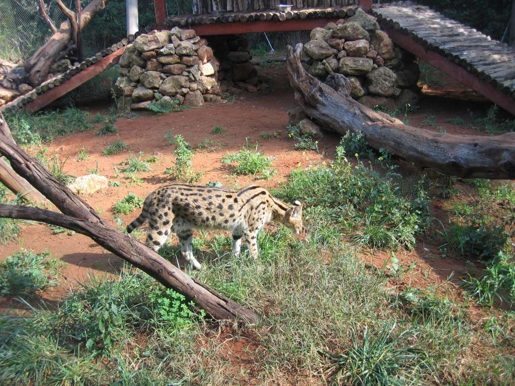 http://i38.servimg.com/u/f38/17/27/77/35/zoo_rb26.jpg