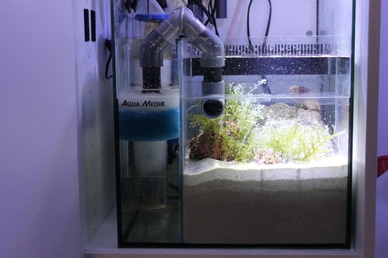 Mon nouveau nano forum aquariophilie aquarium eau douce for Nano aquarium eau douce