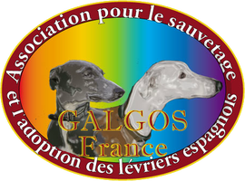 LE FORUM DE GALGOS FRANCE