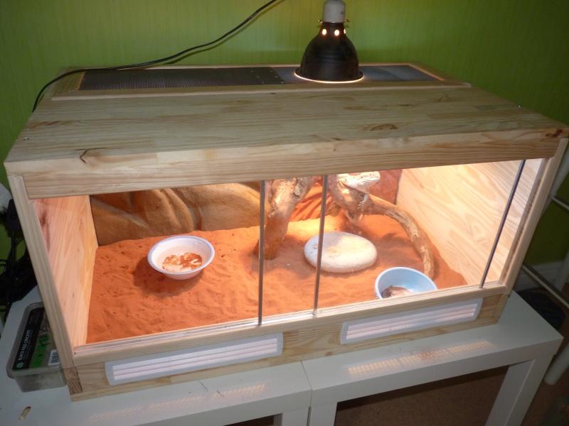 terrarium maison pour pogona ventana blog. Black Bedroom Furniture Sets. Home Design Ideas