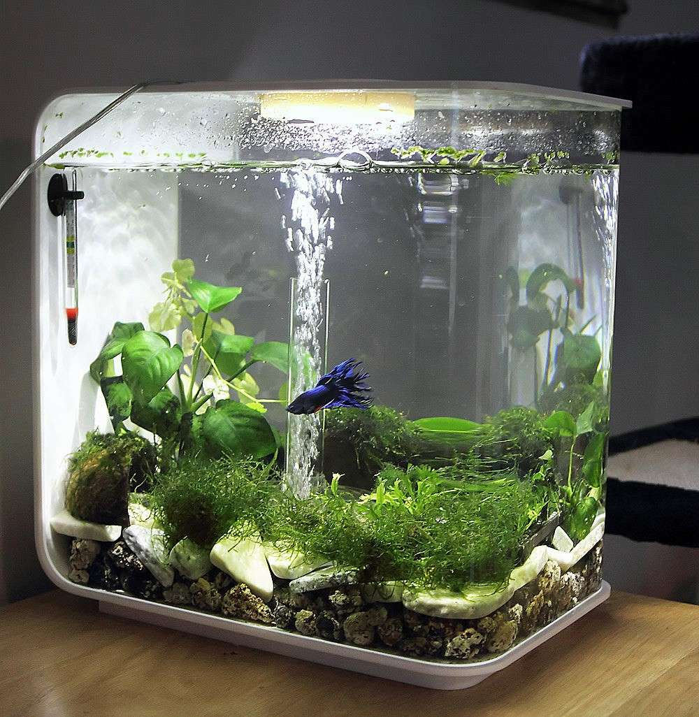 1000 images about fish betta aquariums on pinterest for Aquarium 20 litres poisson rouge