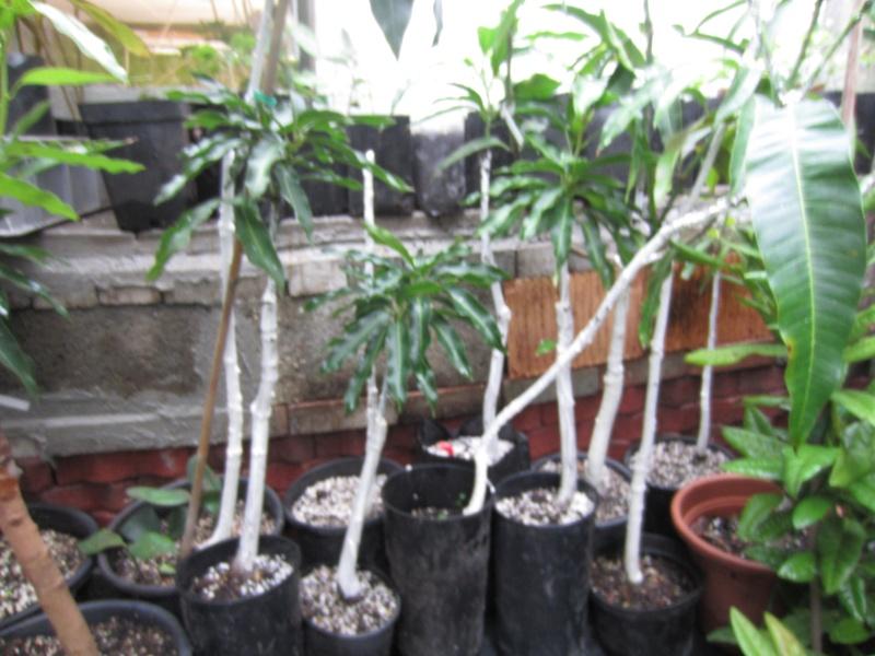 Vente de fleur par correspondance for Vente plantes par correspondance