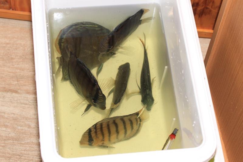 R ception de poissons vendus par correspondance vpc for Vpc aquariophilie