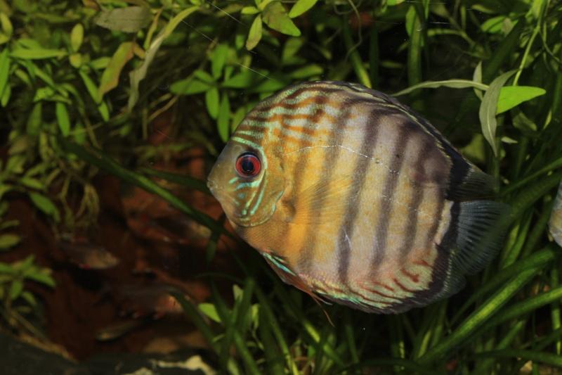 R ception de poissons vendus par correspondance vpc for Poisson vpc