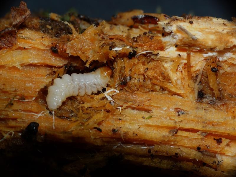 larve_11.jpg