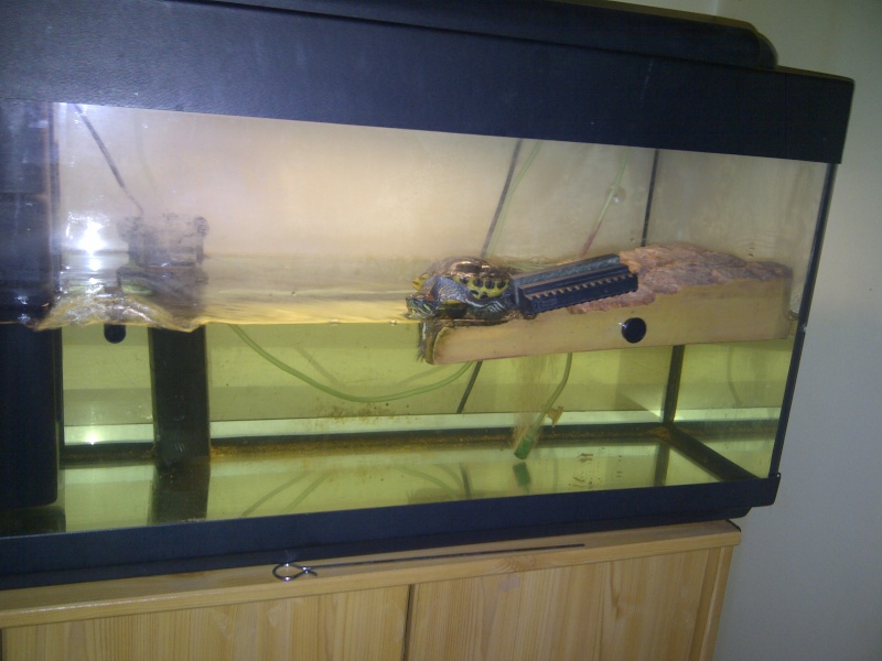 chauffe eau pour aquarium tortue