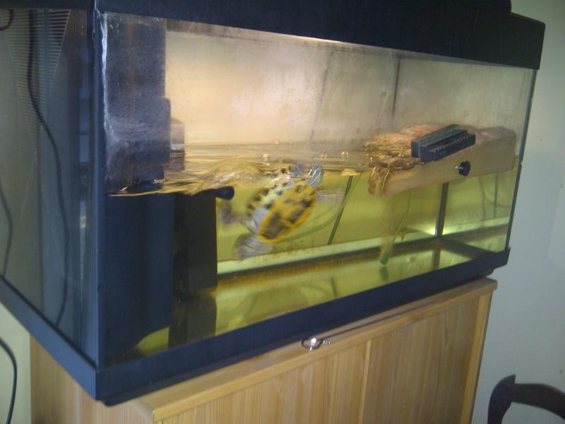 Besoin d 39 aide novice avec une tortue de floride for Aquarium tortue
