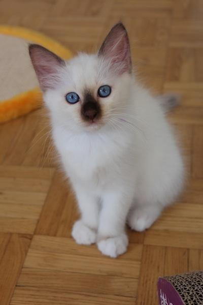 Femelle premier forum culte de la chatte
