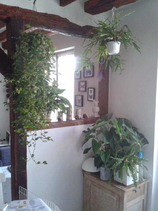 mon espace jardin d 39 hiver au jardin forum de jardinage. Black Bedroom Furniture Sets. Home Design Ideas