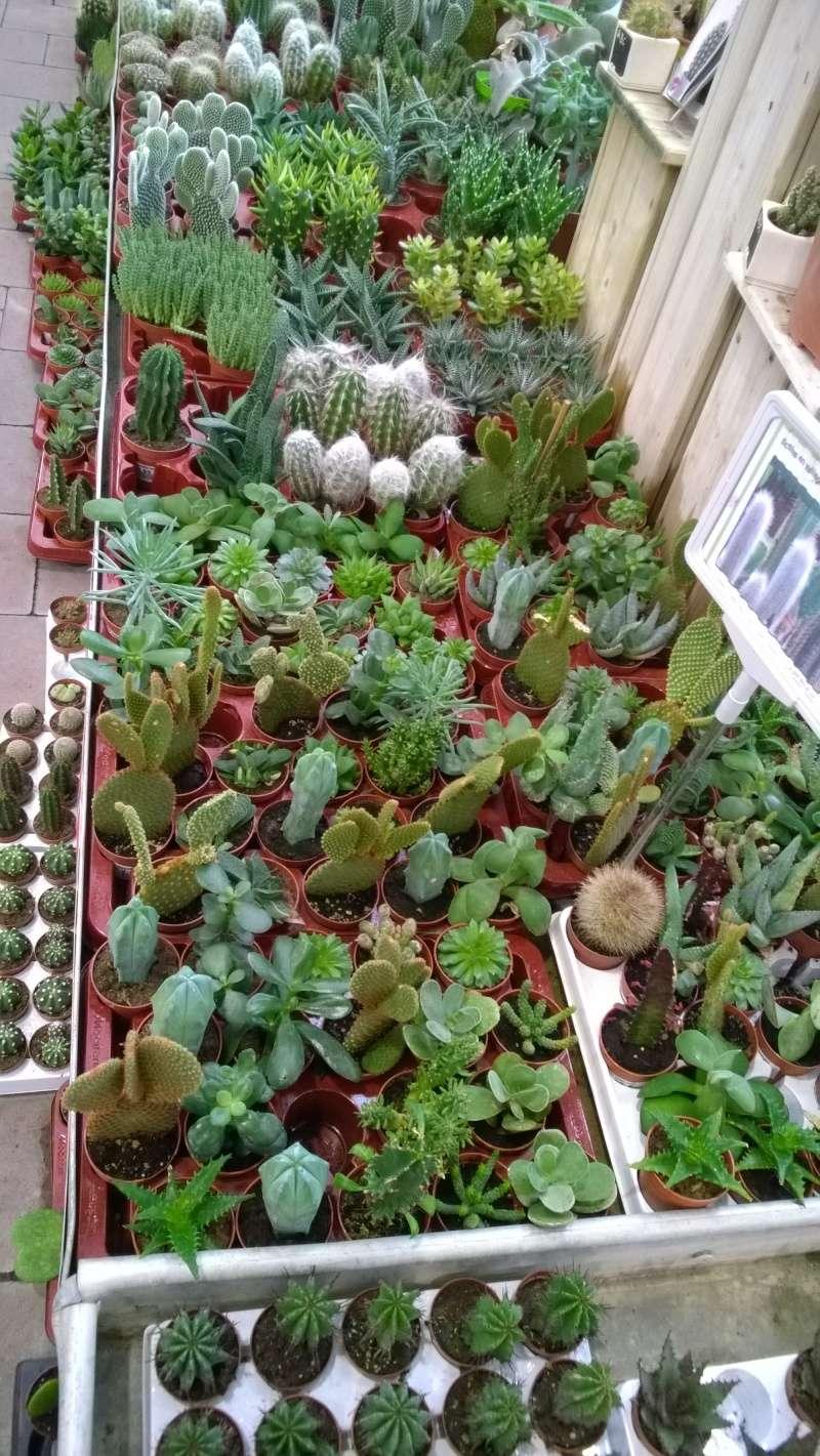 Kleinmanni fabrication d 39 un terrarium page 3 for Acheter des plantes