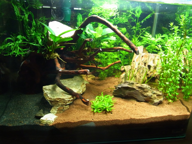 50 litres avec crevettes for Aquarium 50 litres occasion