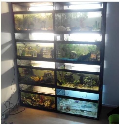 a vendre batterie 8 aquariums