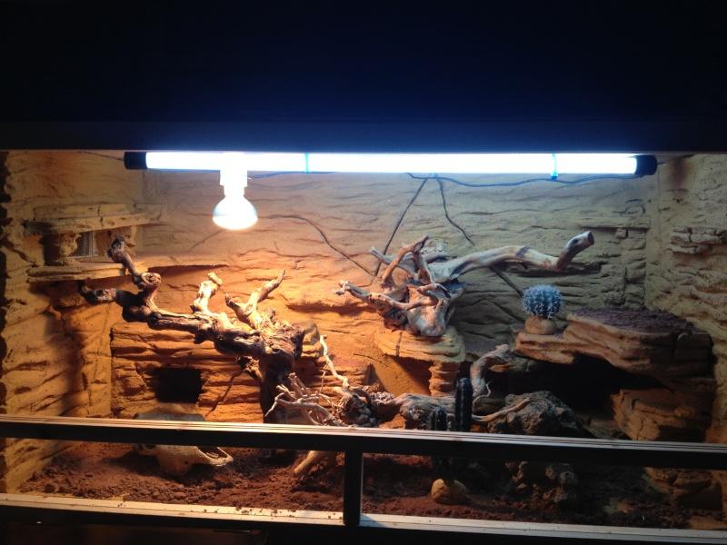 decor de fond terrarium desertique